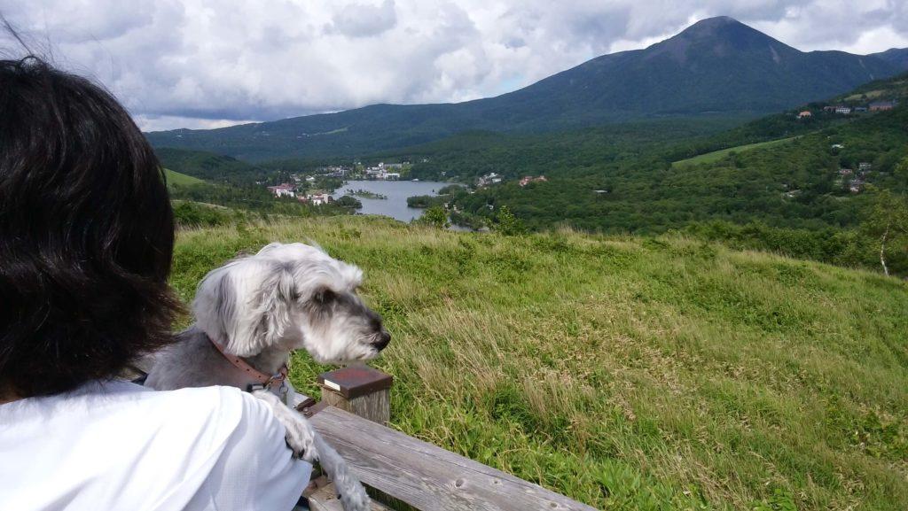 長野県富士見町 入笠山 ワンコと一緒