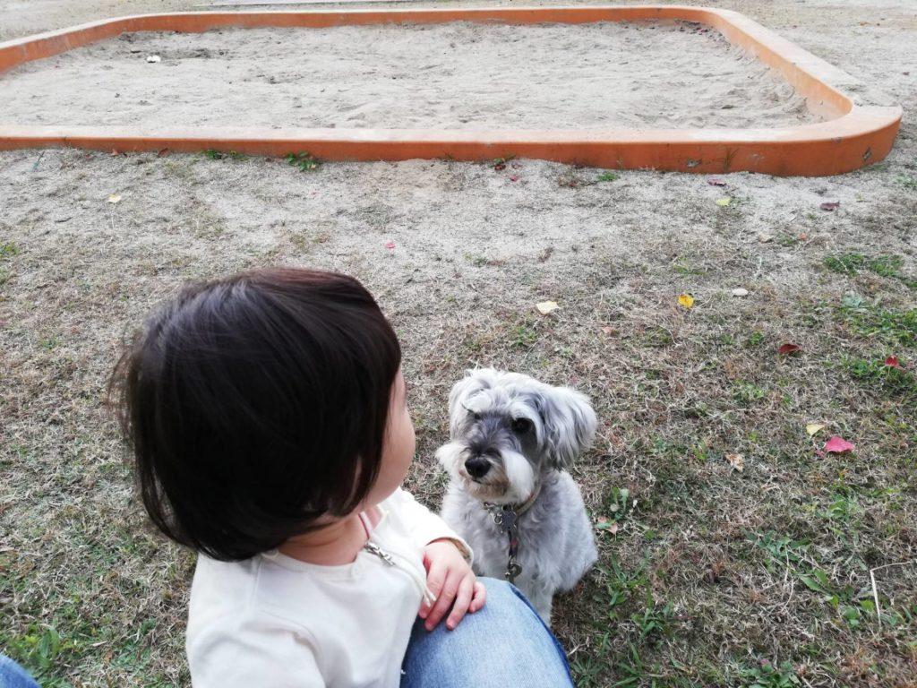 岐阜県内でペットと遊べるスポット