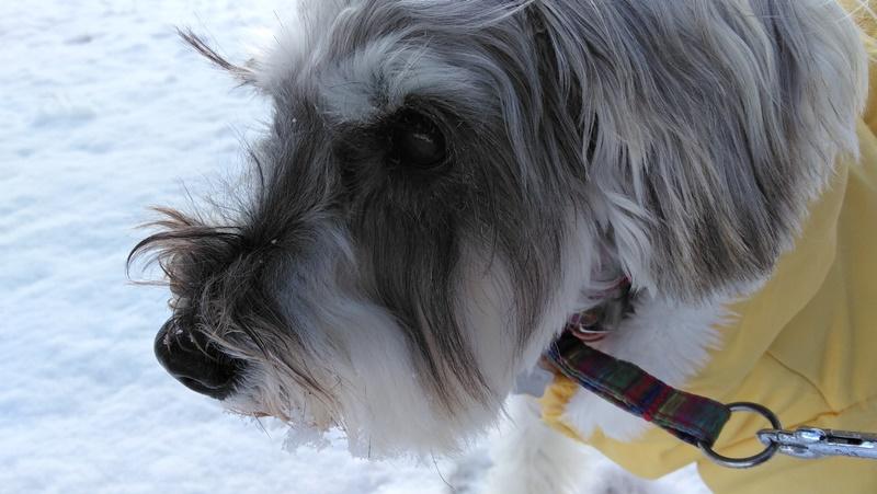 長野県内 ペットと遊ぶ 安曇野アートヒルズミュージアム