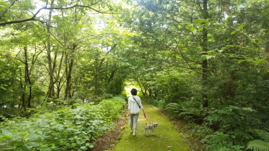 長野県内 ペットと遊ぶ 鳥川渓谷緑地