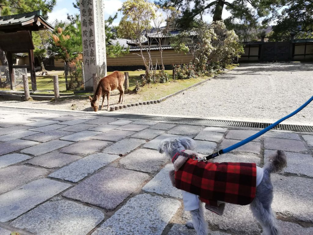 奈良県内 ペット お出かけ