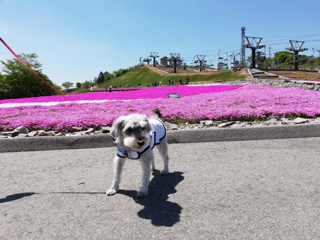 愛知県内 ペット遊ぶ 茶臼山高原