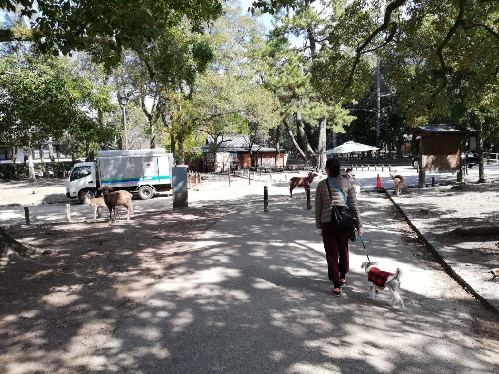 奈良県内 ペットとお出かけ 奈良公園