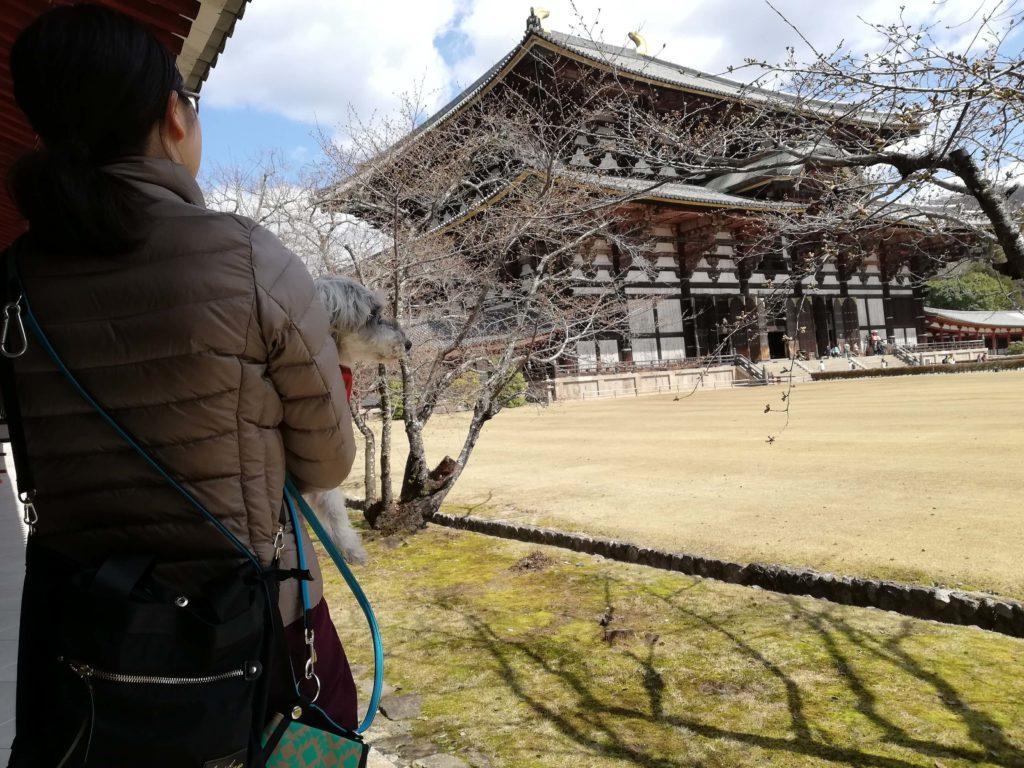 奈良県 ペットとお出かけ 東大寺