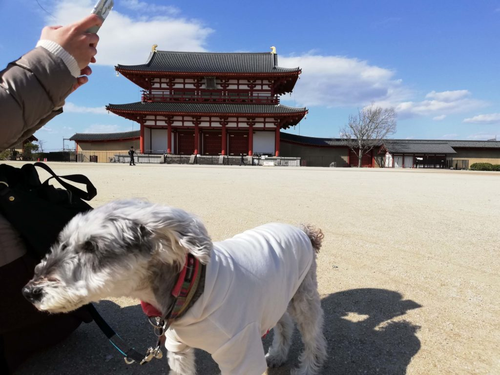 奈良県内 ペットとお出かけ 平城宮跡