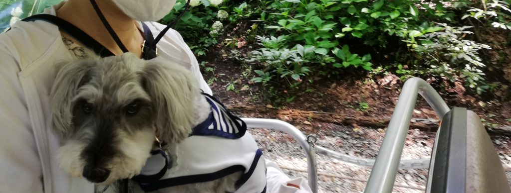 ペットと遊ぶ 長野県富士見町 富士見高原リゾート 遊覧カートとワンコ