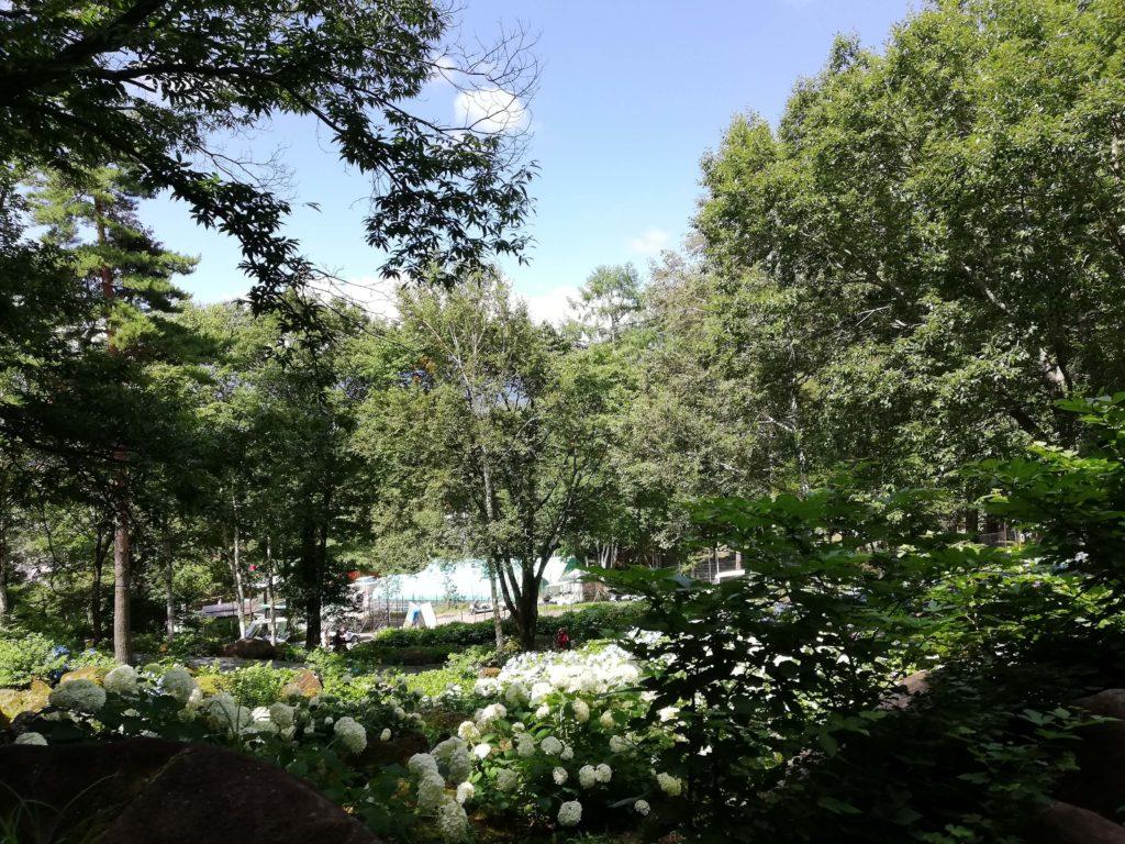 ペットと遊ぶ 長野県富士見町 富士見高原リゾート 紫陽花