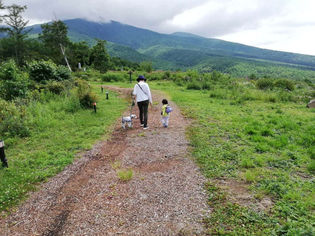 ペットと遊ぶ 長野県富士見町 富士見高原リゾート 創造の森 道幅広い