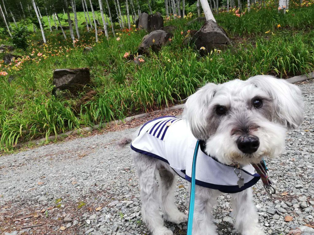 ペットと遊ぶ 長野県富士見町 富士見高原リゾート