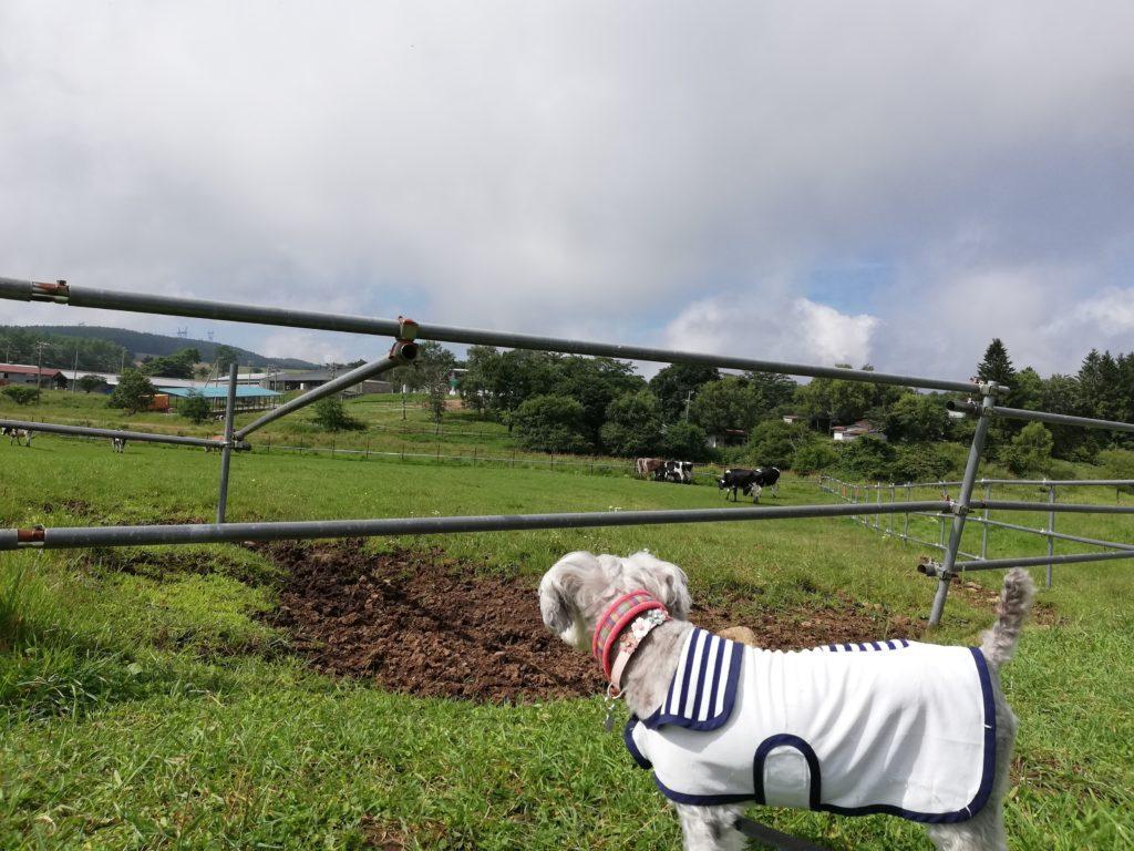 ペットと遊ぶ 長野県長和町 長門牧場 ワンコとうし