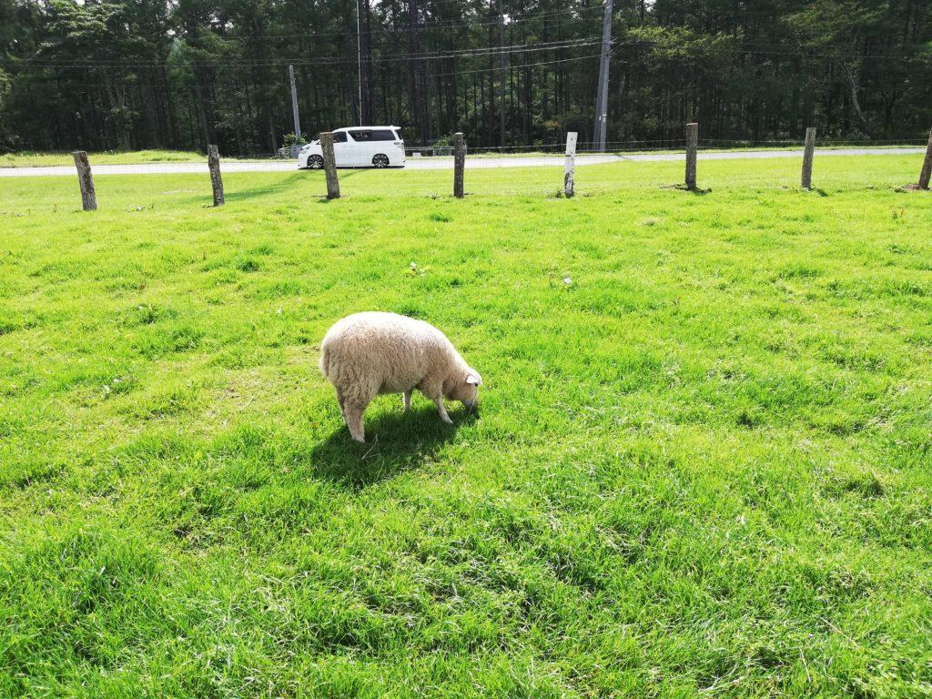 ペットと遊ぶ 長野県長和町 長門牧場 ひつじと触れ合う