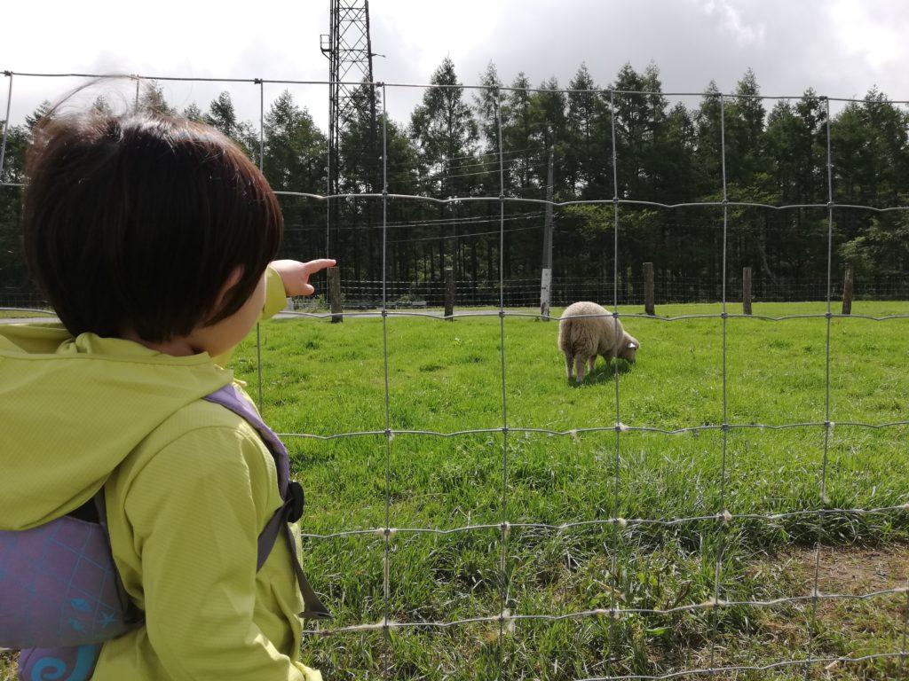 ペットと遊ぶ 長野県長和町 長門牧場 ひつじと子ども