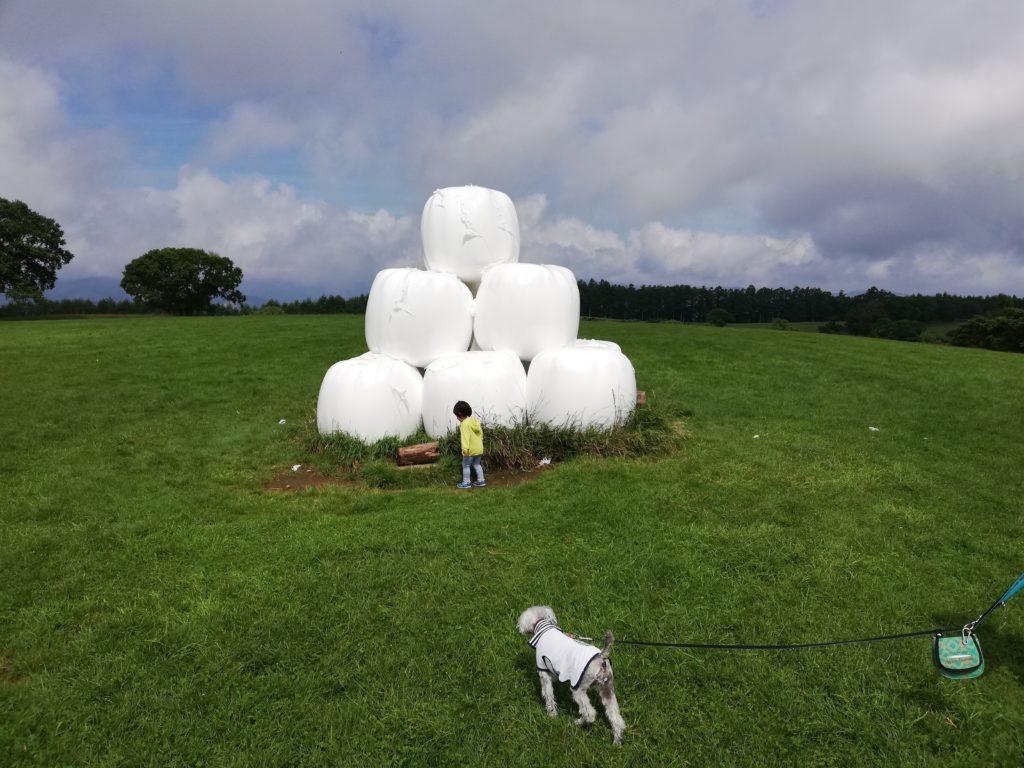 ペットと遊べる 長野県長和町 長門牧場 ワンコと遊んだ感想