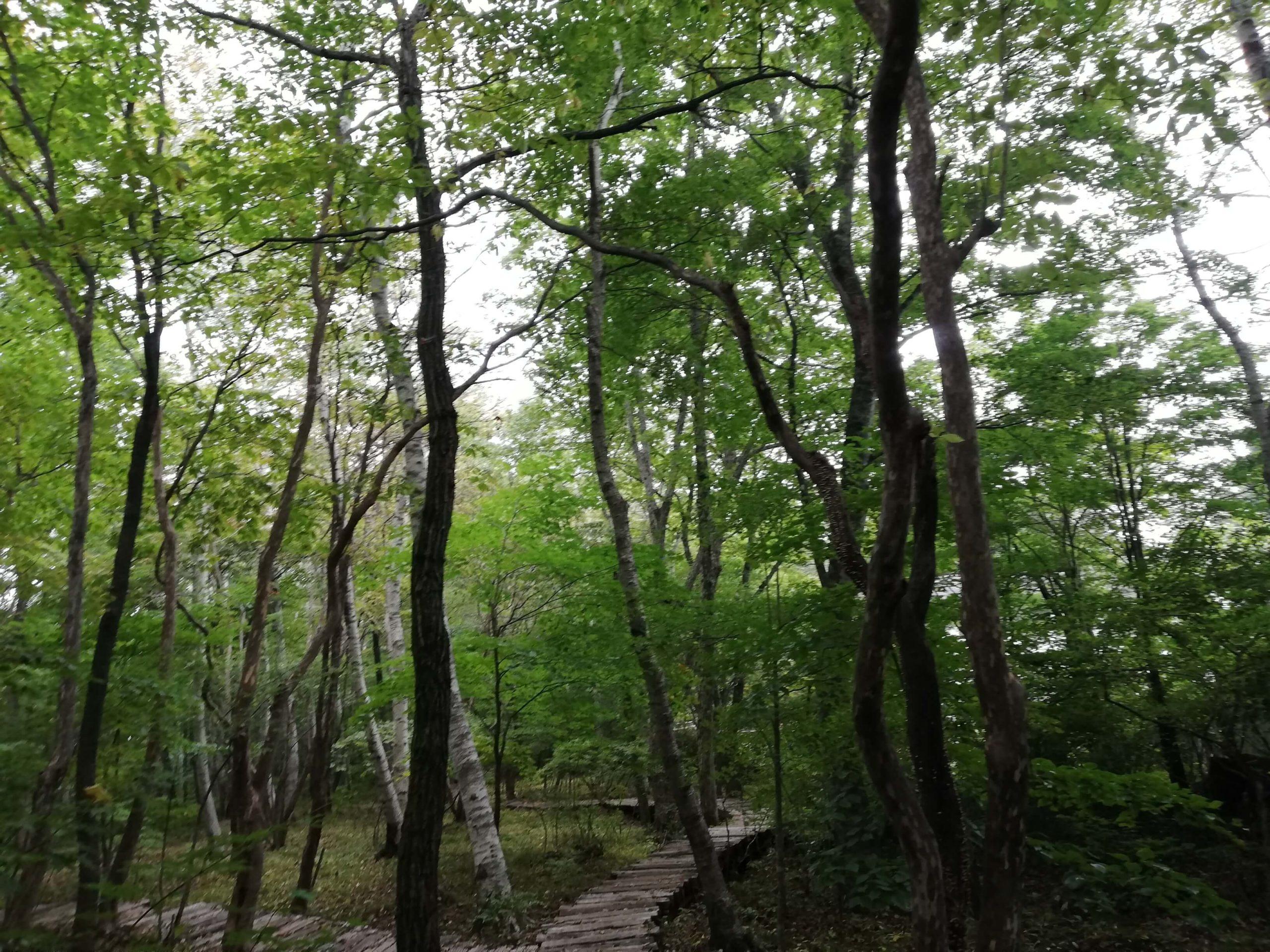 ペットお出かけ 山梨県北杜市 八ヶ岳倶楽部 雑木林をペットと散策