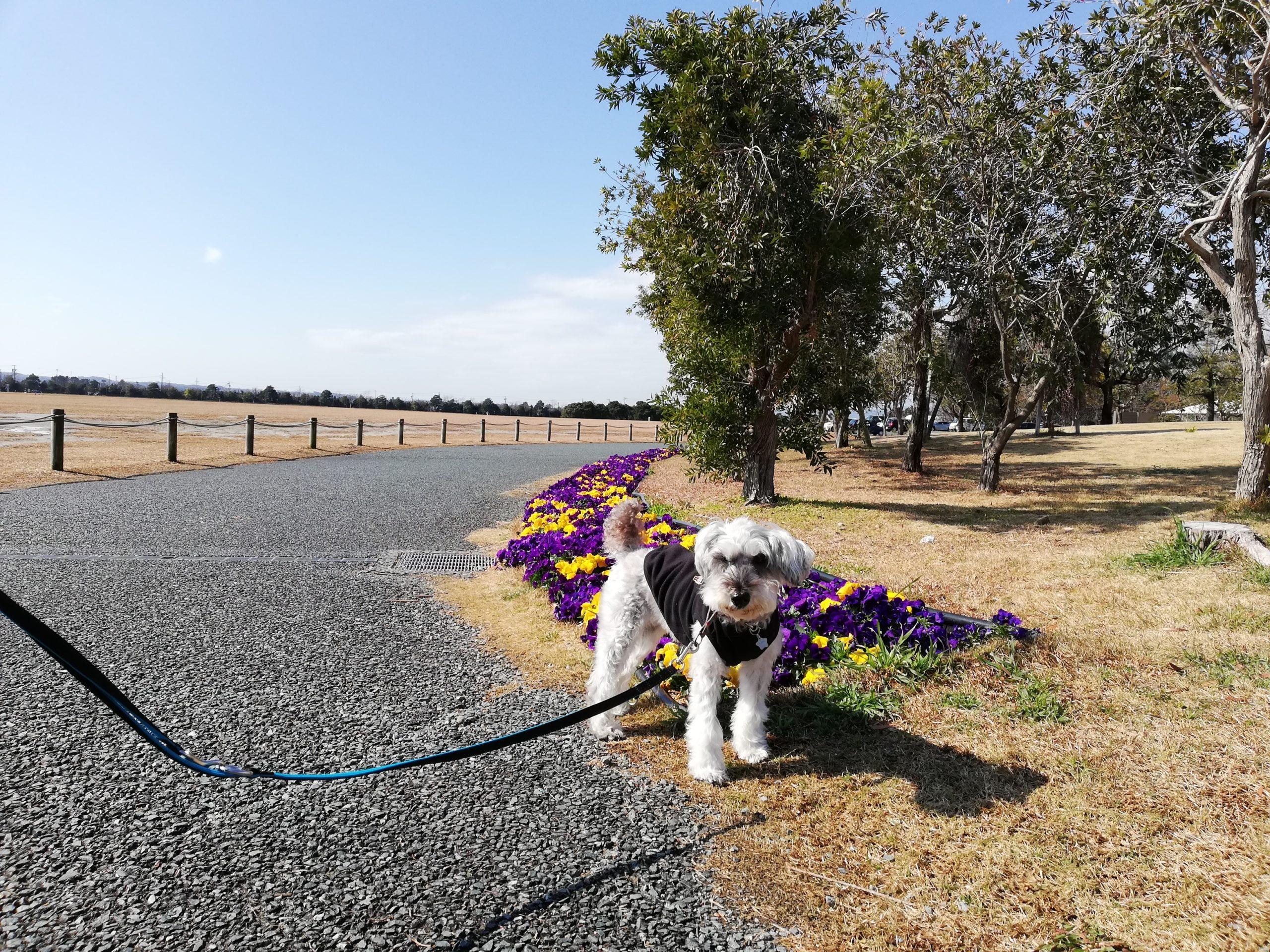 静岡県内でペットと遊ぶ 静岡県浜松市 浜名湖ガーデンパーク ワンコと一緒に撮影