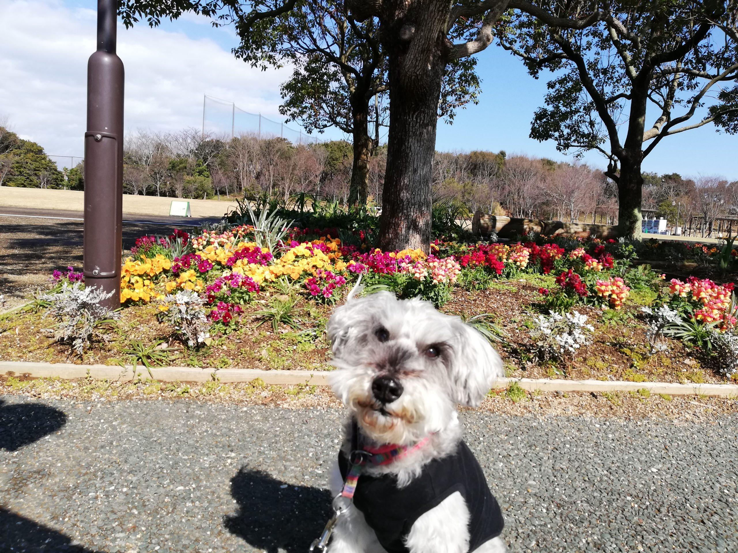 静岡県内でペットと遊ぶ 静岡県浜松市 浜名湖ガーデンパーク 風が強い
