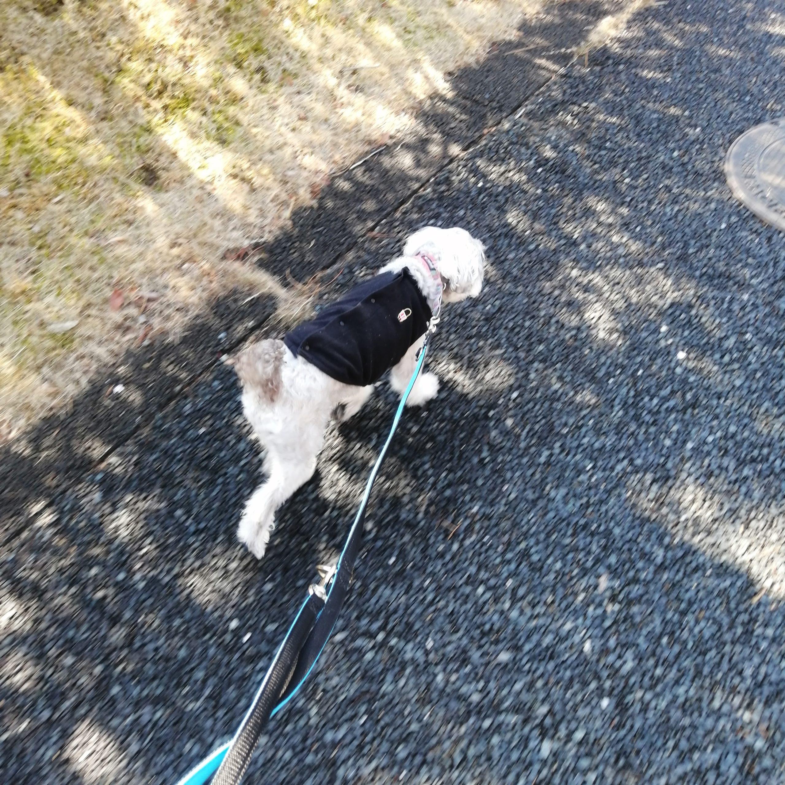 静岡県内でペットと遊ぶ 静岡県浜松市 浜名湖ガーデンパーク ワンコとの散歩にちょうどよい