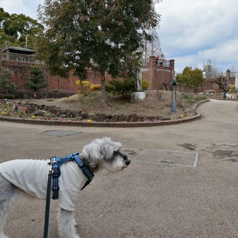 ペットとお出かけ 岐阜県岐阜市 長良公園 魅力 ワンコがゆっくり過ごせる公園