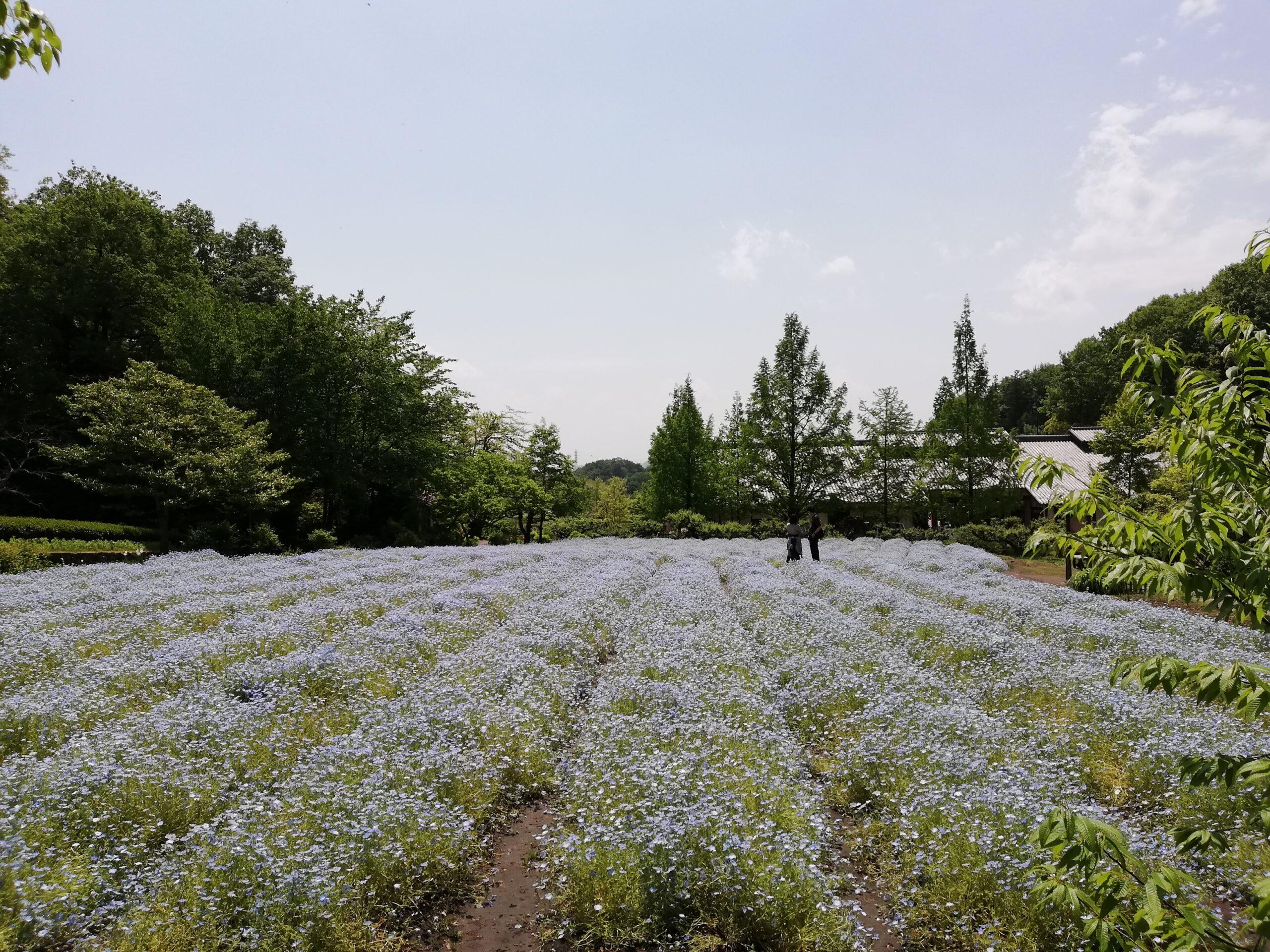 ペットとお出かけ 岐阜県美濃加茂市 ぎふ清流里山公園 お花畑 ネモフィラ